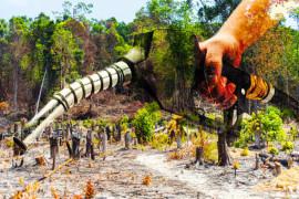 olio-palma-biocarburanti-2