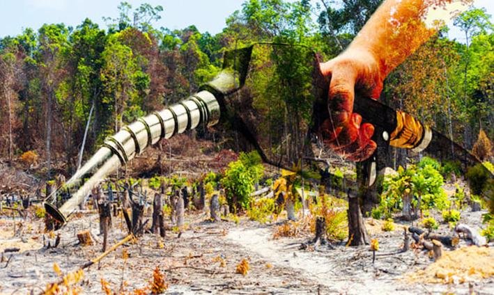 """Photo of Frodi sul biodiesel: """"Olio di palma spacciato per scarto di cucina"""""""
