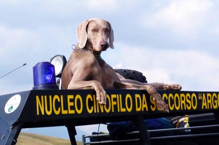 Photo of Fiorano al Serio dice addio a Greta, eroico cane da soccorso: dai premi, ai salvataggi di Amatrice
