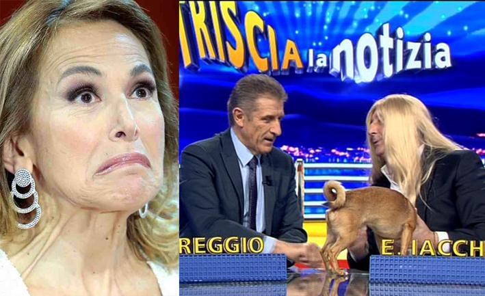 """Photo of Striscia la Notizia – Ezio Greggio dice al cane Lucino: """"Vai da Barbara d'Urso, che è… una collega"""""""