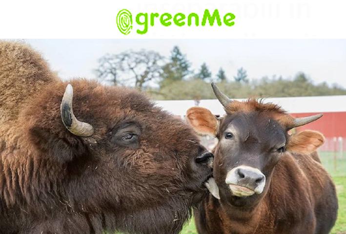 Photo of Un bisonte e un vitello ciechi, diventano amici inseparabili in un santuario per animali maltrattati